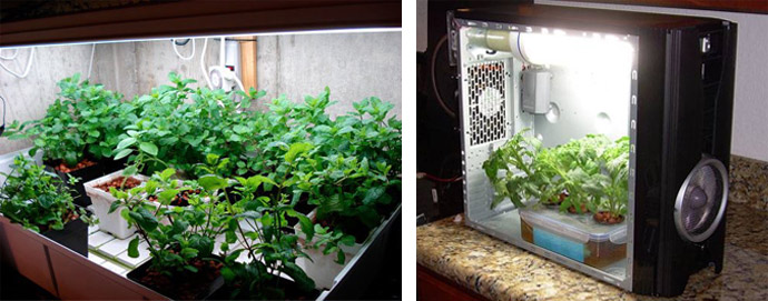 grow box fai da te