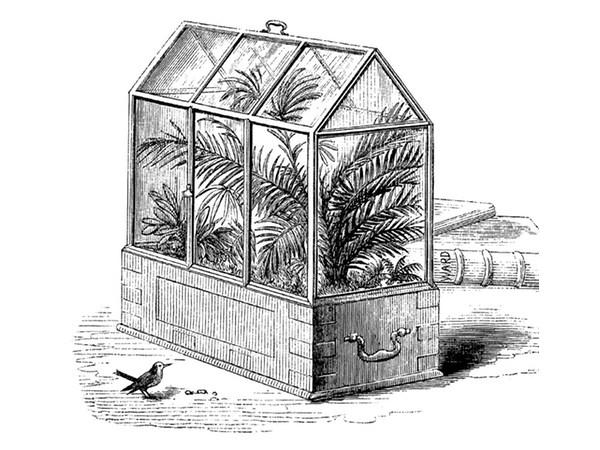 Wardian case Vittoriana
