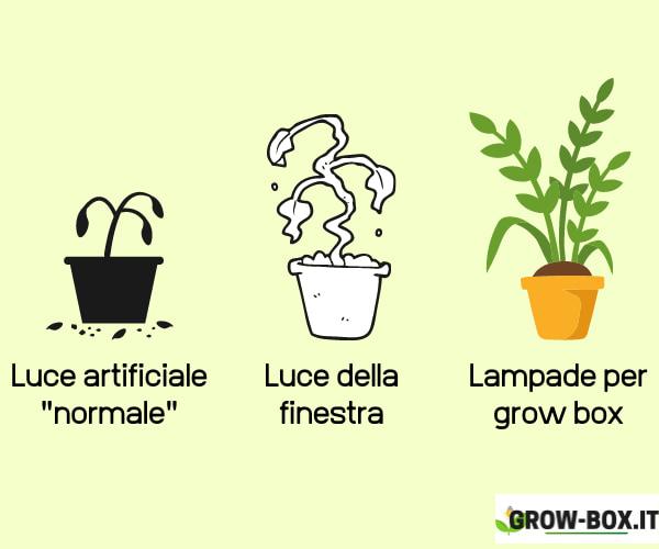 coltivare indoor senza lampade