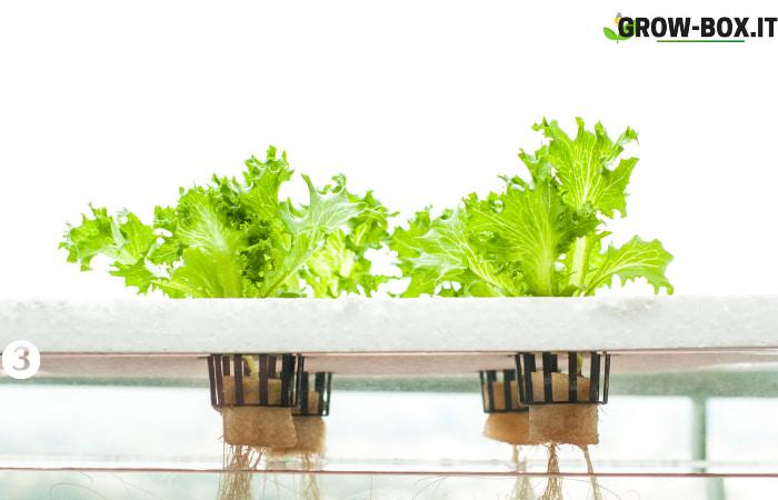 foto sistema idroponico coltivazione indoor