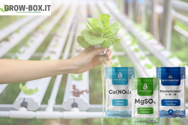 migliori fertilizzanti per idroponica