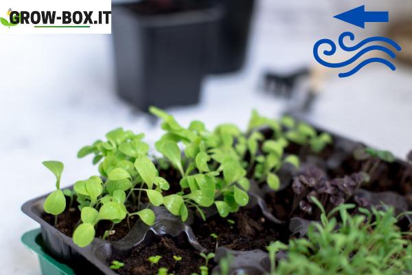 sistema aspirazione grow box