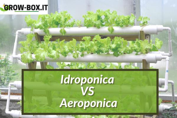 differenze idroponica e aeroponica