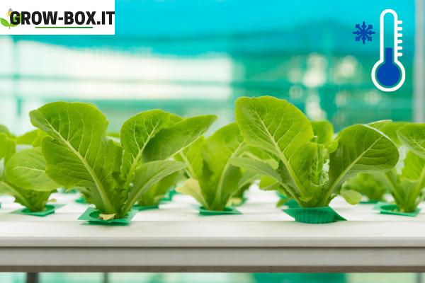 come raffreddare grow box